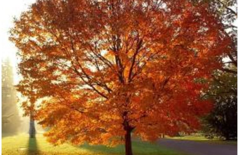 It's Mabon – there is much to be grateful for this year.